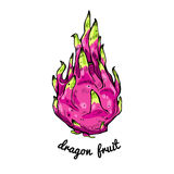 Pitaya or dragon fruit tasty nature asian diet delicious and inscription. Exotic pink tropical fresh . Pitaya or dragon fruit tasty nature asian diet delicious Stock Illustration