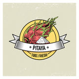 Pitaya or Dragon fruit Vintage, hand drawn fresh fruits background, summer plants, vegetarian and organic citrus and. Other, engraved Royalty Free Stock Photos