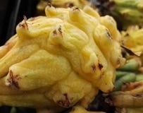 Pitaya giallo, pitahaya, frutta del drago Frutta colombiana tropicale esotica immagini stock
