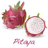 Pitaya lub smok owoc wektor ilustracja wektor
