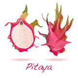 Pitaya lub smok owoc wektor ilustracji