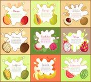 Pitaya and Mango Fruity Fruits Vector Illustration. Pitaya and mango fruity fruits, summer rambutan, banana and watermelon. Marang slices and nutritious longan stock illustration