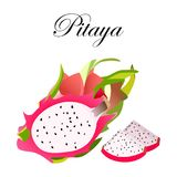 Pitaya Sketch of tropical dragon fruit. Exotic pink pitahaya fruit with green leaves on the top. Tropical cocktail recipe, juice d. Essert smoothie packaging Stock Image
