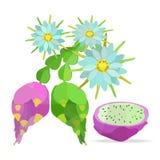 Pitaya und Blumenvektorgegenstände Stockfoto
