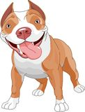 σκυλί pitbull Στοκ εικόνα με δικαίωμα ελεύθερης χρήσης