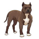 Pitbull. royalty-vrije illustratie