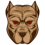 Pitbull. Abstract vector color illustration portrait of fighting dogs. Head of dog breed pit bull Royalty Free Stock Photo