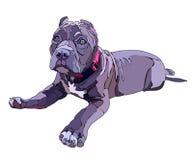 Pitbull de encontro do cachorrinho, ilustração do vetor fotos de stock