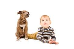 Pitbull de garçon et de chiot Photographie stock