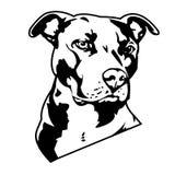 Pitbull de tatouage Photo stock