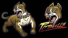 Pitbull dog angry Stock Photography
