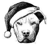 Pitbull dog with christmas santa hat Stock Images