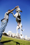 Dog Jumping for Food Stock Images