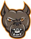 Pitbull Dog Mongrel Head Angry Cartoon Stock Image