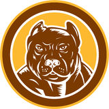 Pitbull Dog Mongrel Head Circle Woodcut Stock Images