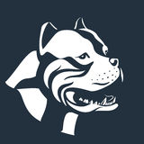 Pitbull dog sketch on black. Pitbull sketch isolated on black. Terrier dog head vector illustration Stock Image