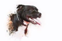 Pitbull Terrier del perro Imagen de archivo libre de regalías