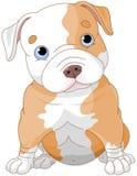 Pitbull valp stock illustrationer