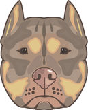 Pitbull vector Stock Images