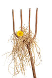 Pitch Fork. Loaded with straw and a single yellow daisy Stock Photography