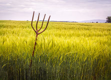Pitch Fork In Wheat Field Royalty Free Stock Photography