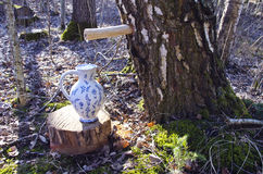 Pitcher jug and birch tree with spigot and sap drops Royalty Free Stock Images