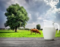 Pitcher of milk on cow background on green meadow. With tree Stock Photo