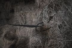 Pitchfork. A three pronged pitchfork laid over loosened bales of hay at horse stables Stock Photography