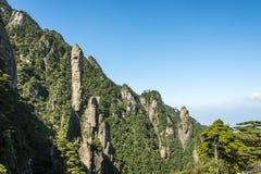 Pithon gigantesco que sube en la montaña Fotografía de archivo libre de regalías