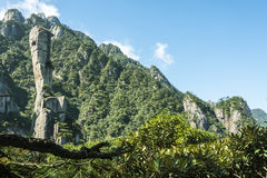 Pithon gigantesco que sube en la montaña Foto de archivo