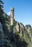 Pithon gigantesco que sube en la montaña Imagenes de archivo