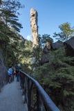 Pithon gigantesque se levant dans la montagne Photos stock