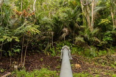 Piti Gun located in the jungle above Asan beach in Guam. Looking down the barrel of one of three Japanese Vickor& x27;s Model 3 coatal defense guns in the jungle Stock Images