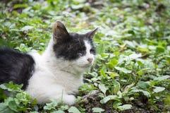 Pitiful cat Stock Photo