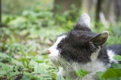 Pitiful lonely cat Royalty Free Stock Photos