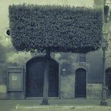 Pitigliano kwadratowi Drzewa Zdjęcie Stock