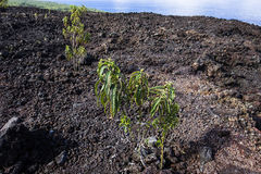 Piton de la Fournaise volcano, Reunion island, France Stock Images