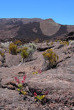 Piton DE La Fournaise vulkaan Stock Afbeeldingen