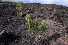 Piton DE La Fournaise vulkaan, Bijeenkomsteiland, Frankrijk Stock Afbeeldingen