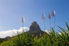 Piton de la Petite con la montaña del flor de la caña de azúcar en Mauricio Fotografía de archivo
