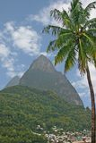 Piton & Palm Royalty Free Stock Images