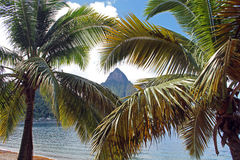 Piton St Lucia between two palm trees Stock Photo