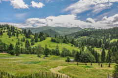Pitoresque forest view. Pitoresque landscape in Romania Piatra Neamt Royalty Free Stock Photography