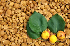 Pits. Apricot pits dried. The background of apricot pits Royalty Free Stock Photos