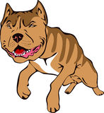 Pitt bull illustration Stock Images