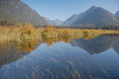 Pitt Lake marsh Royalty Free Stock Photos