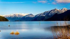 Pitt Lake met de Sneeuw dekte Pieken van de Gouden Oren, Tintelingspiek en andere Bergpieken van de omringende Kustbergen af stock foto's