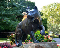 Pitt panther. A statue of the University mascot, the Pitt Panther, on the college campus Stock Photos