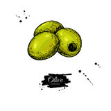 Pitted olive.  Stock Images