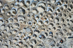 Pitted Rock Texture - Background Stock Photography
